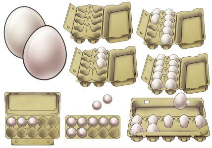 Eierschachteln_10er