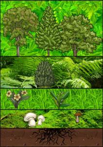 Waldschichten