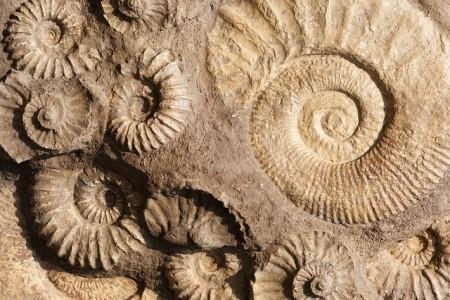 fossil_pixabay
