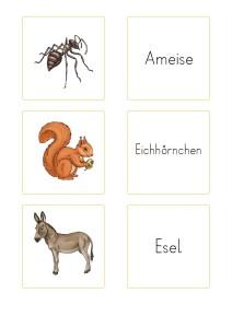 memory_einheimische_tiere